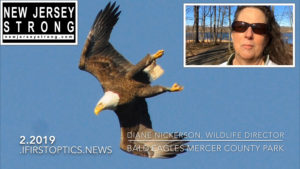 Bald Eagles Fly the Garden State