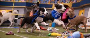 "DISCOVERY RESCUES 96 during PUPPY BOWL SUNDAY RUFF & FLUFF Contest for the CHEWY ""Lombarky"" Trophy"